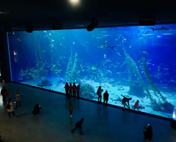 夏お出かけ水族館