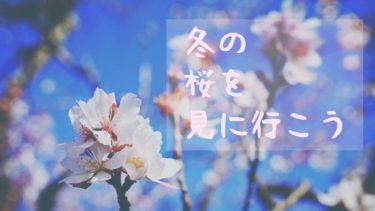 冬にお花見?! 今が見頃の冬桜!ドライブスポットに最適な桜山公園でお花見リベンジ!